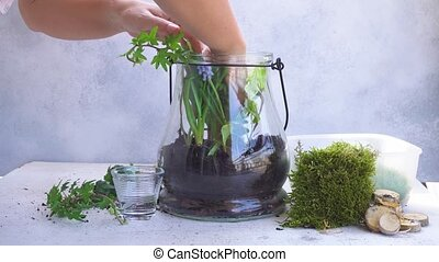 garden inside mason jar - mason jar with plants inside,...