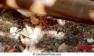 Garden Irrigation Drip pipe C