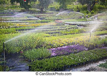 Garden irrigation - Irrigation device watering flowers