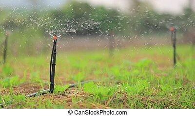 Garden Irrigation Sprinkler watering lawn