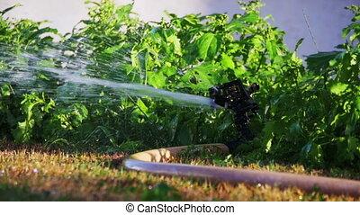 Garden Irrigation Sprinkler Watering Lawn in Slow Motion -...