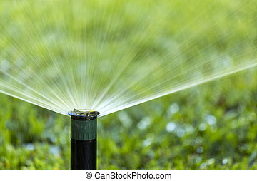 Garden Irrigation system spray watering lawn. - Garden...