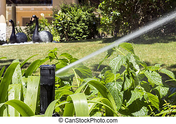 Garden Irrigation system sprinkler watering flowerbed and lawn.