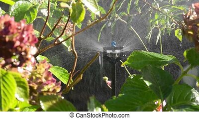 Garden irrigation with an automatic watering system - Plant...