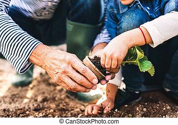 garden., jardinería, grandaughter, traspatio, hombre mayor