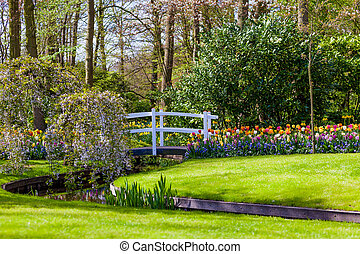 Garden landscape. modern garden design. Landscaped Yard and Garden