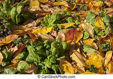 Garden lawn in autumn