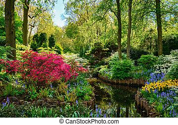 garden., lisse, цветок, keukenhof, netherlands.