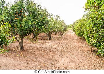 garden., mûre, ferme, arbre, croissant, mandarin