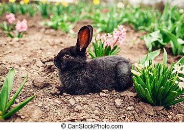 garden., mały, pojęcie, posiedzenie, wiosna, czarnoskóry, ...