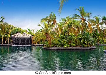 garden., maldives., トロピカル, 秋, 小さい, プール