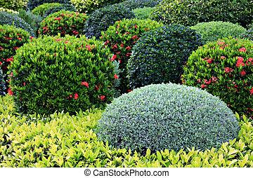 Garden - Manicured garden shrubs.
