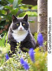 Garden obesity portrait