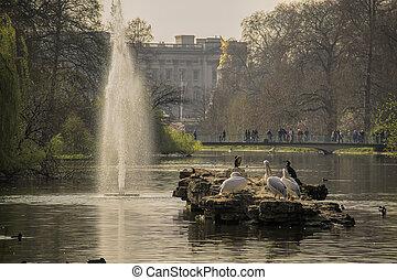 Garden of Buckingham palace