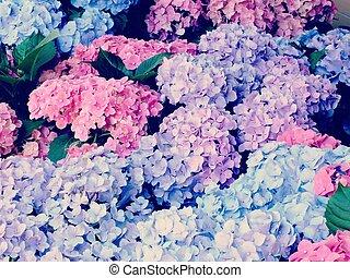 garden of colorful hydrangea flower bouquet