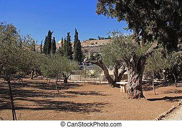 Garden of Gethsemane in Israel
