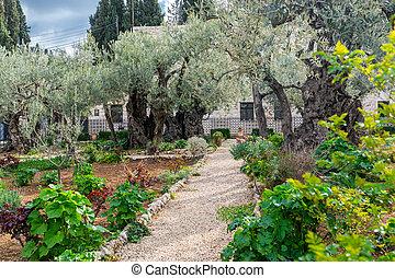 Garden of Gethsemane - pathwalk