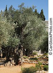 Garden of Jerusalem