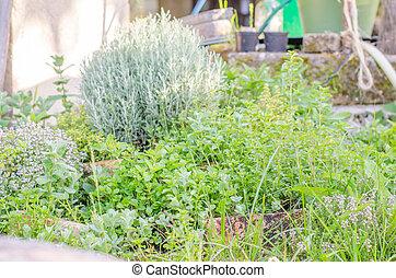 Garden of medicinal herbs.