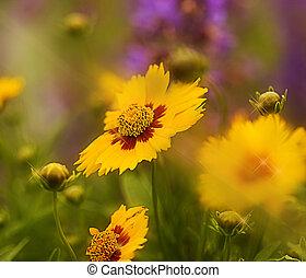 Garden of Sunshine - Photo/illustration - garden of bright...