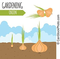 garden., onion., 植物, growth.
