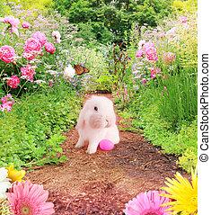 garden., paashaas