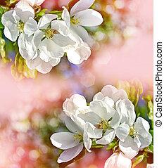 garden., paisagem., maçã, primavera, árvore., florescendo
