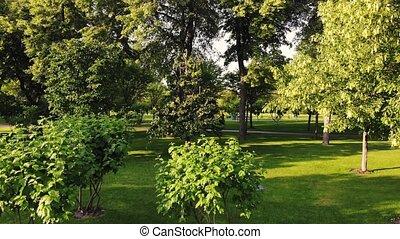 garden., parc vert, en mouvement, bourdon, vue, par