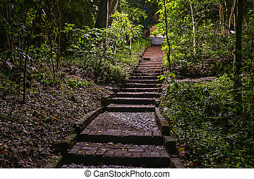Garden path with tropical trees on both side at night with stairs, Tanzania, Africa