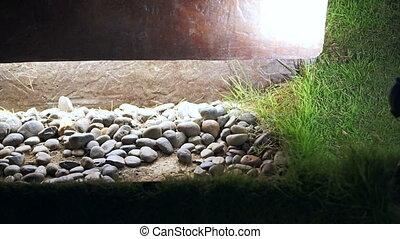 Garden Pebble landscape decoration with lighting