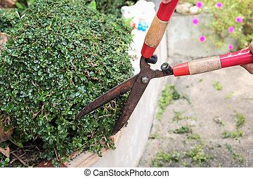 garden., plante, émondage, jardinier, mains