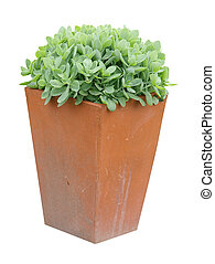 Garden Planter with succulent plant isolated with clipping...