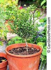 Garden plants in the pots