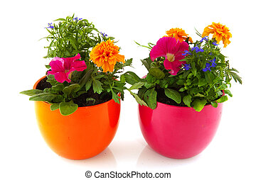 Garden plants with flowers