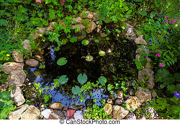 Garden pond with water plants in the backyard