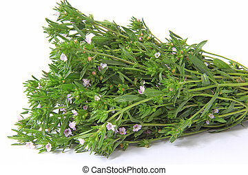 Garden savory - A bunch of garden savory or summer savory...