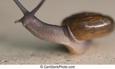 Garden snail on concrete floor - Macro view of garden snail...
