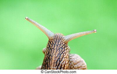 Garden snail on green blur background.