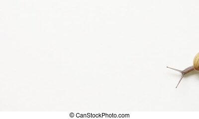 "Garden Snail Traversing a White Background - ""Tiny garden..."
