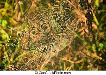 Garden spider or Argiope aurantia in its net - Close up...