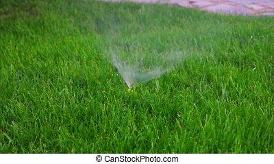 Garden sprinkler working in spring lawn. Watering. Slow...