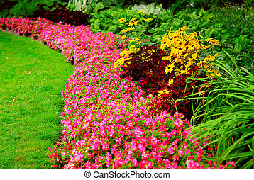 Garden - Blooming flowers in late summer garden flowerbeds