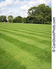 Garden - Photo of a striped lawn garden with trees in the...