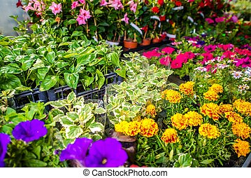Garden Store Flowers For Sale