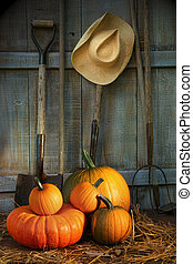 Garden tools in shed with pumpkins - Garden tools in wood...