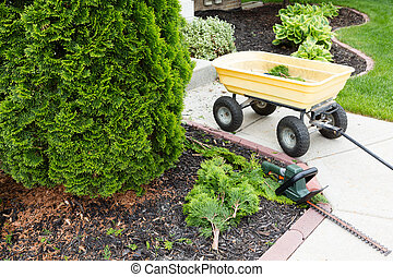 Garden tools used to trim arborvitaes in spring with a...