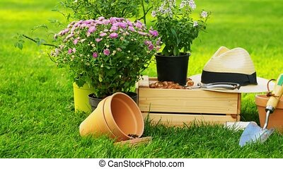 garden tools, wooden box and flowers at summer - gardening ...