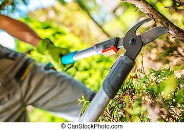Garden Tree Branches Cut