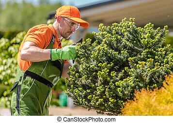 Garden Trees Care