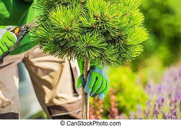 Garden Trees Pruning